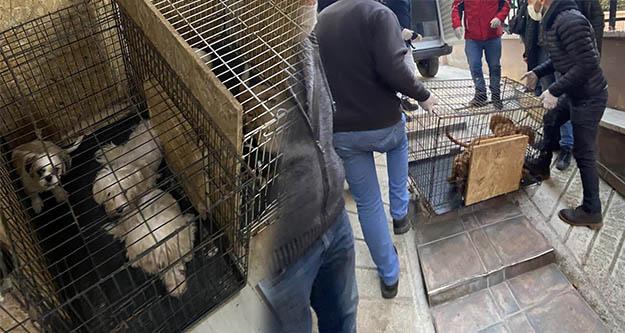 Ankara'da    68 köpeği tutsak eden kişiye para cezası