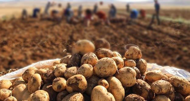 Patates üreticisi isyanda:  Bankaların hepsi  çiftçinin tarlalarını satılığa çıkarıyor