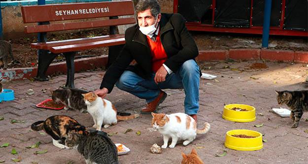 Adana'da zehirlenen 25  sokak kedisinden 17 si öldü,5'i kayıp
