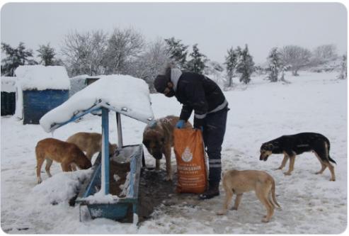 İmamoğlu'ndan sokak hayvanlarına destek çağrısı