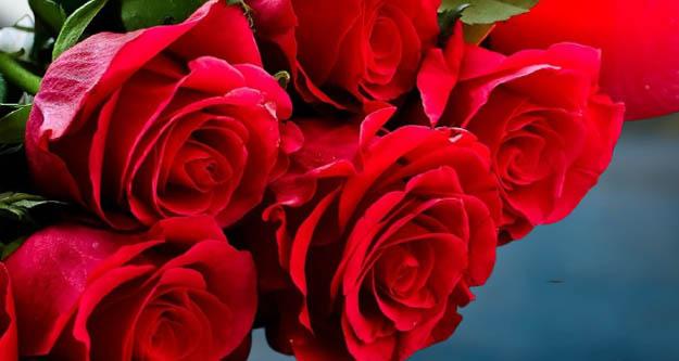 Sevgililer Günü, Hollanda gülü ile kutlanacak