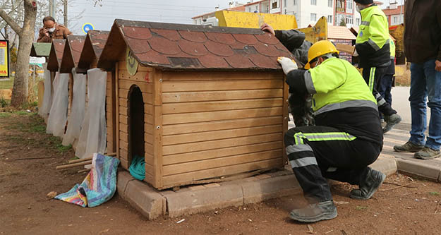 Odunpazarı Belediyesi ve hayvansever derneklerinden iş birliği