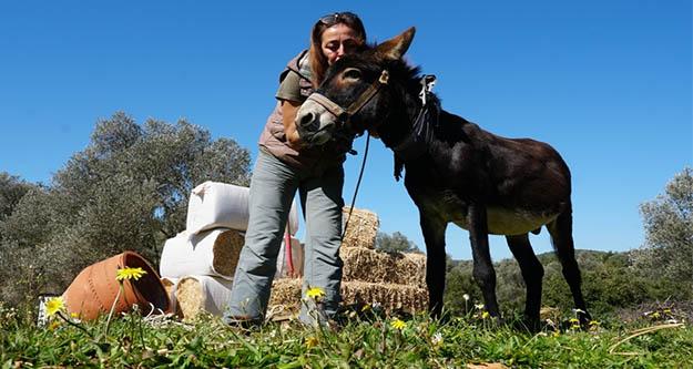 Petbulance ekibinin tedavi ettiği 'Lodos 'artık  çim biçiyor