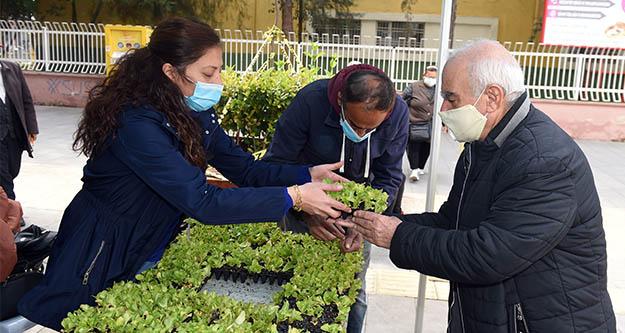 Tarsus Belediyesi 1 milyon ücretsiz yerli marul fidesi dağıtıyor