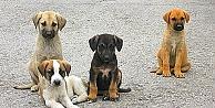 Sokak hayvanları can dostları ile buluşuyor