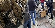 Ankara#039;da    68 köpeği tutsak eden kişiye para cezası