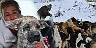 Ankara Kent Konseyi sokak hayvanları bir arada