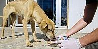 Maltepe Belediyesi 14 bin sokak hayvanını tedavi etti