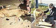 Sokak köpeği şanslı hayata tutundu