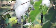Meteoroloji'den 3 il için zirai don uyarısı