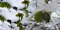Meteoroloji#039;den zirai don uyarısı