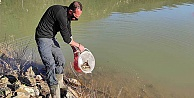 Binlerce sazan balığı kovalarla gölete taşıdı
