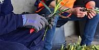 Bornova Belediyesi, Çiçek üretimine başladı