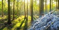 Milli Parklar  ağaç kesimine açıldı !