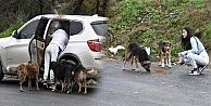 Burcu Kıratlı, sokak hayvanlarını elleriyle besledi