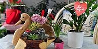 Anfa bitki evi Sevgililer Günü'için hazır