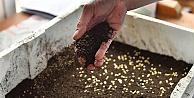 Beylikdüzü'nde ata tohumları toprakla buluşuyor