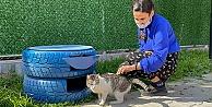 Seyhan'da lastik ve paletler sokak kedilerine yuvaya dönüşüyor